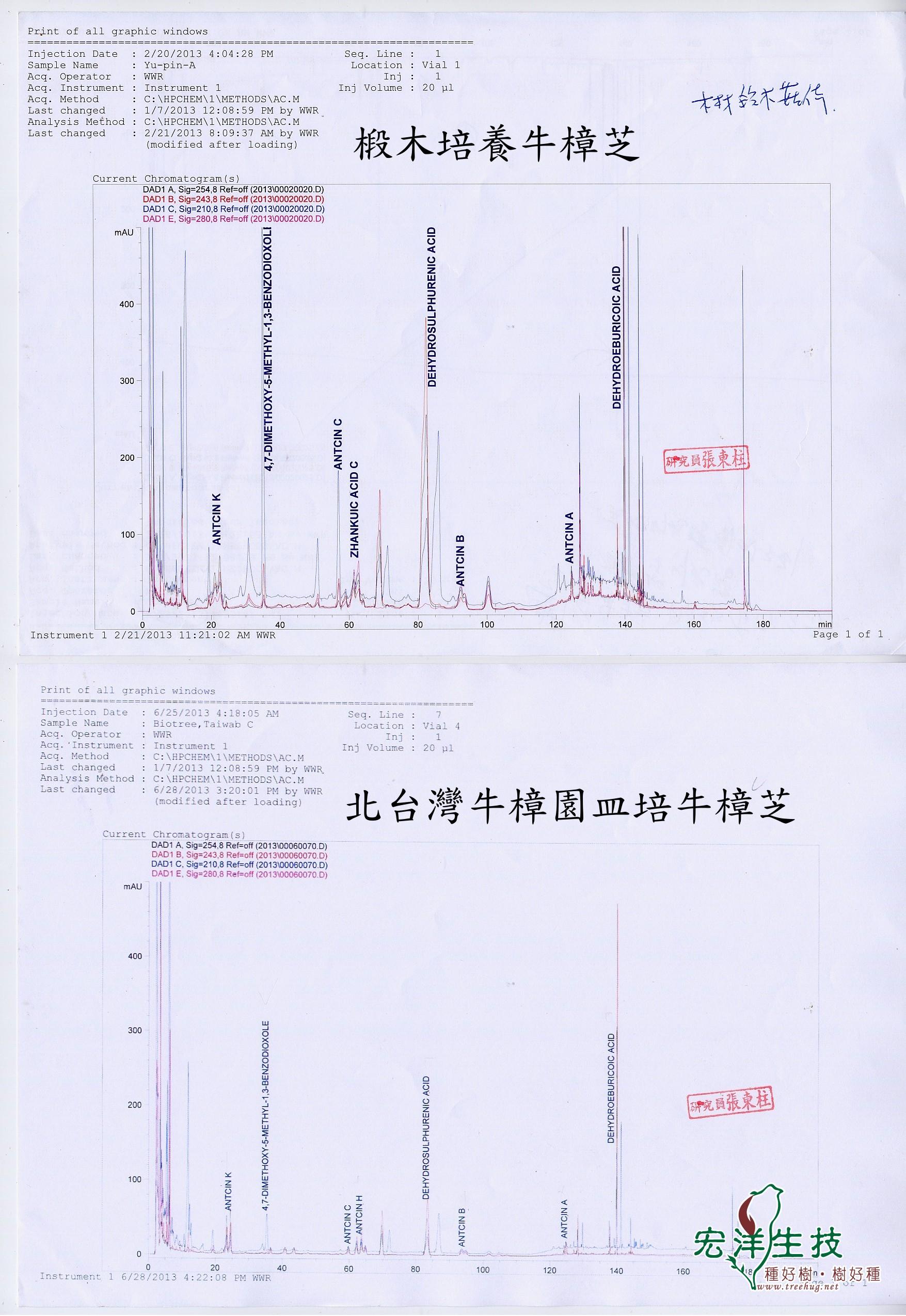 北台灣牛樟園皿培牛樟芝與椴木牛樟芝成分分析比較圖