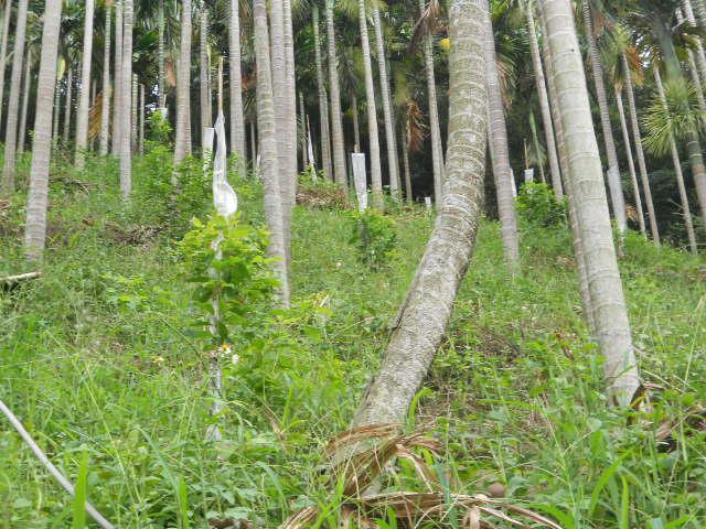 新店屈尺牛樟樹造林基地
