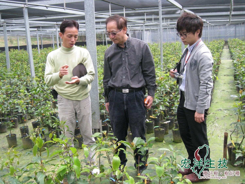 牛樟 (Cinnamomum kanehirae Hayata)