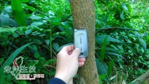 飛鳳山牛樟樹林樹幹已經兩吋